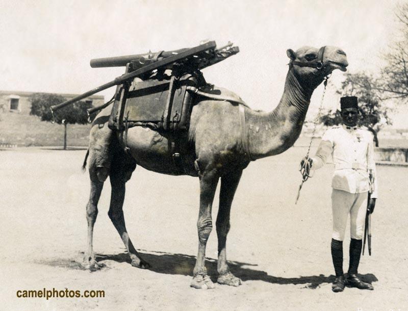 CamelGun