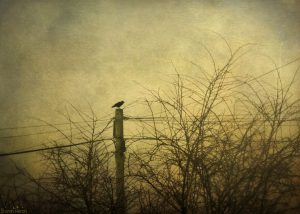 morning_trees_tree_bird_texture_misty_fog_lyrics-707804