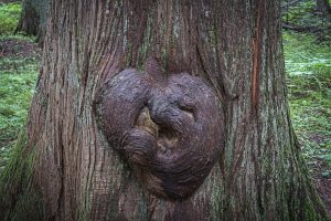 tree-4680306_1280
